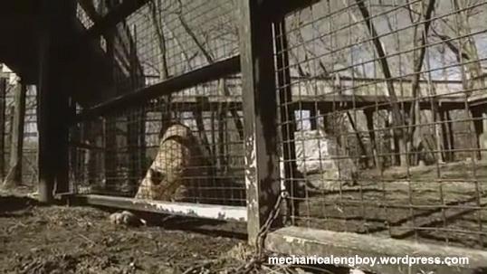 zero21(zoo hungry)